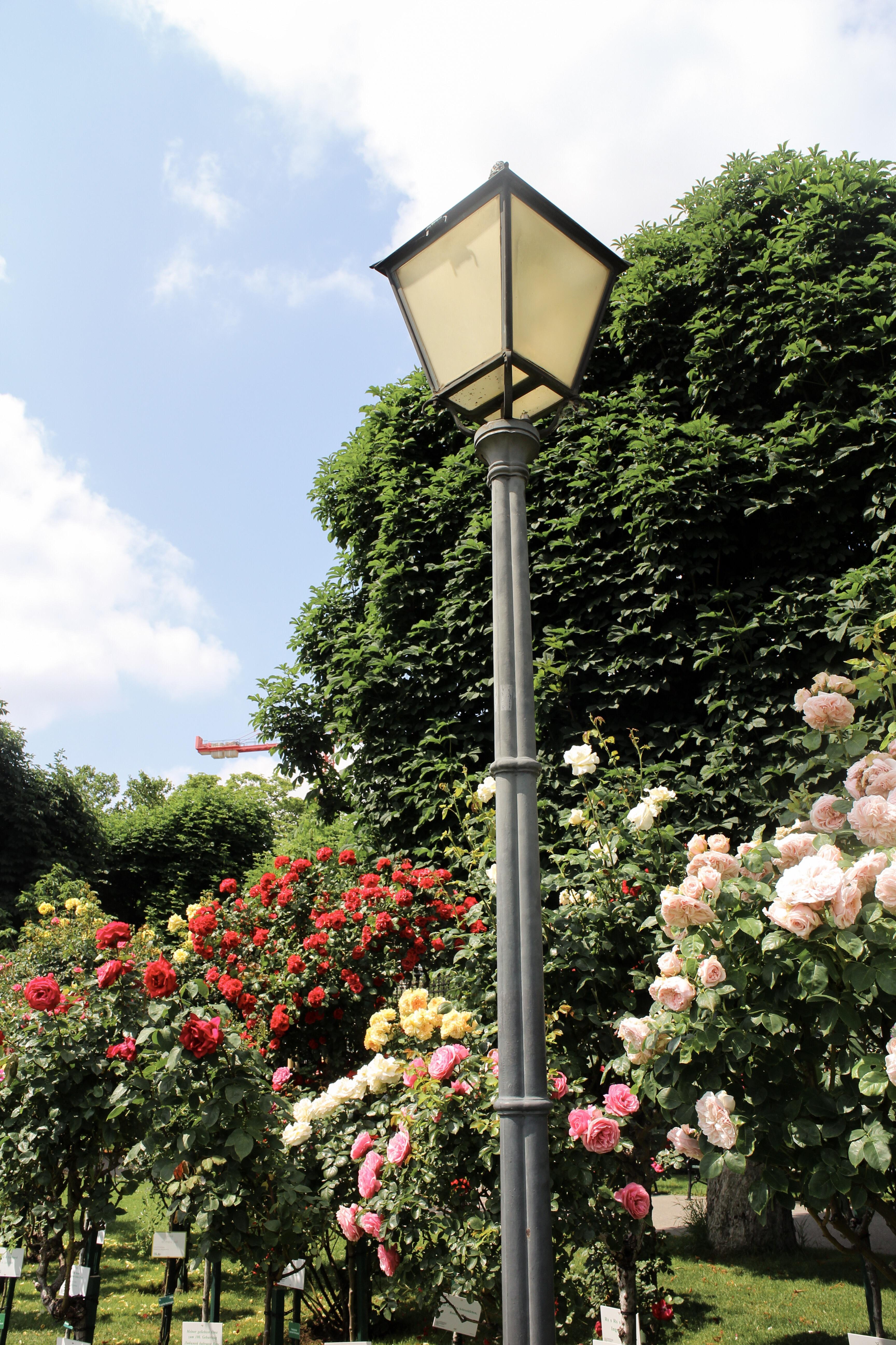 Three Perfect Days in Vienna: Volksgarten roses