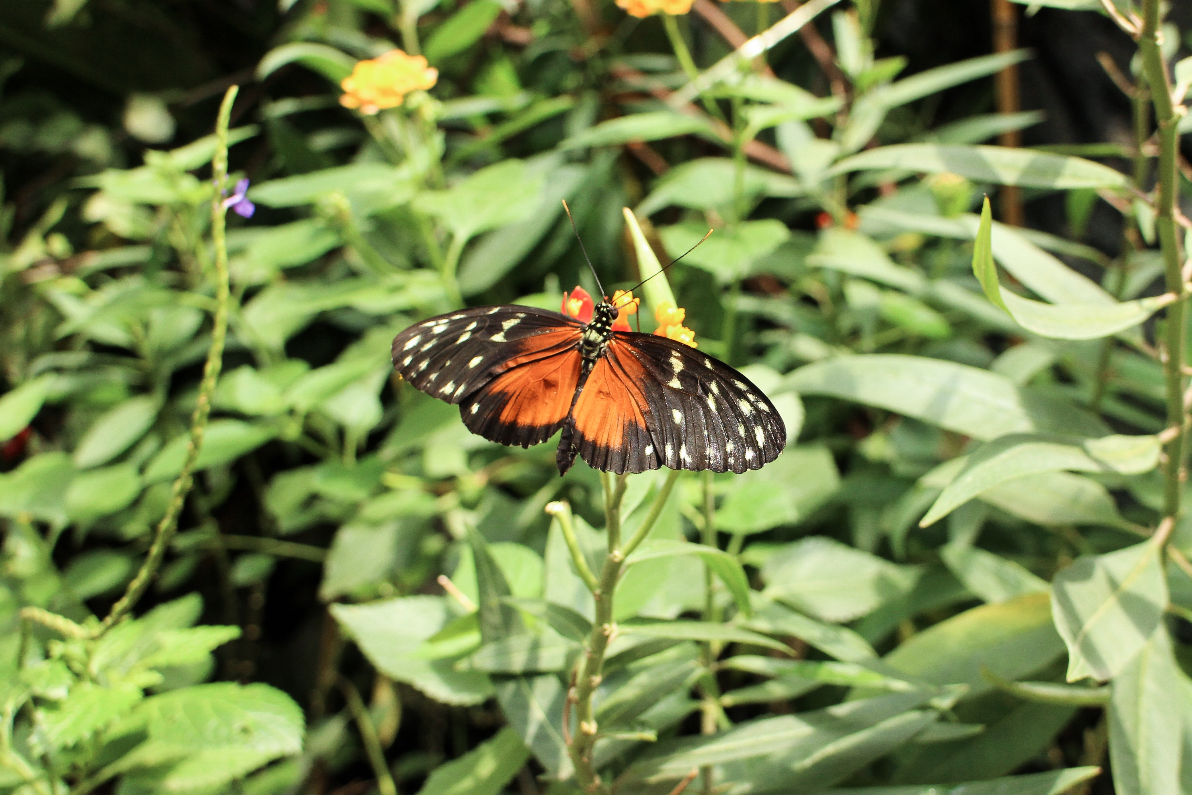 Three Perfect Days in Vienna: Butterfly house